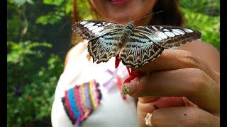 STREETS OF THAILAND -- Travel -- Bai Orchid & Butterfly Farm --