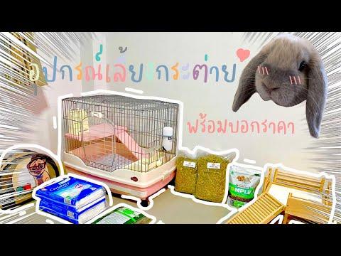 Bunny's story EP.2   เลี้ยงกระต่ายใช้อะไรบ้าง ราคาเท่าไหร่ ??