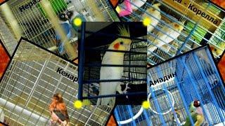 Купили попугая Нимфа - Корелла. + Видео из магазина. Магнитогорск