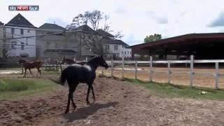تكساس تفضل ديربي الخيول على الانتخابات