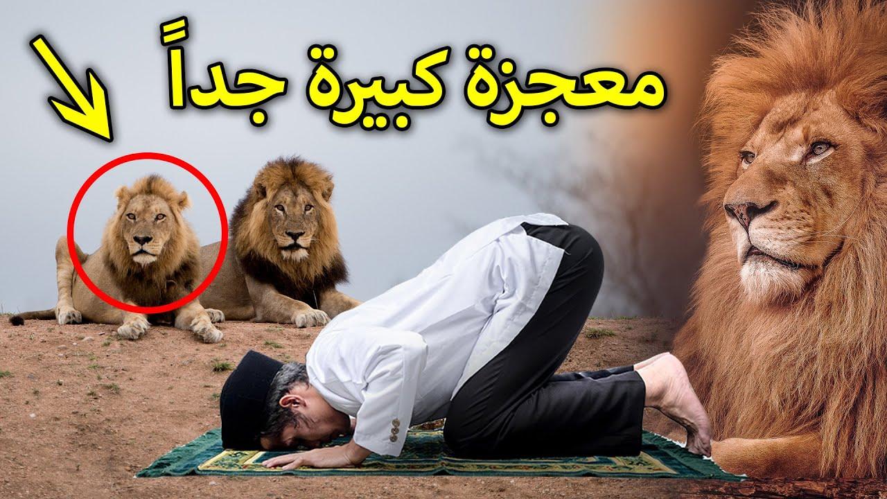انظروا ماذا فعل هذا الرجل عندما هجمت عليه الاسود وهو يصلي ؟ معجزة كبيرة جدا سبحان الله !!