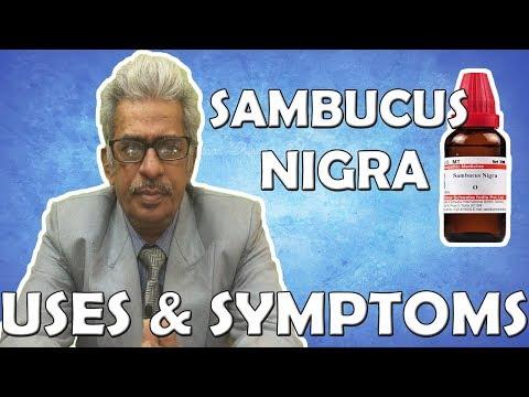Sambucus Nigra - Uses and Symptoms in Homeopathy by Dr. P.S. Tiwari