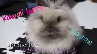 My Bunny Mofhie Playtime