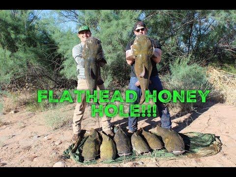 Monster AZ Flatheads!!!