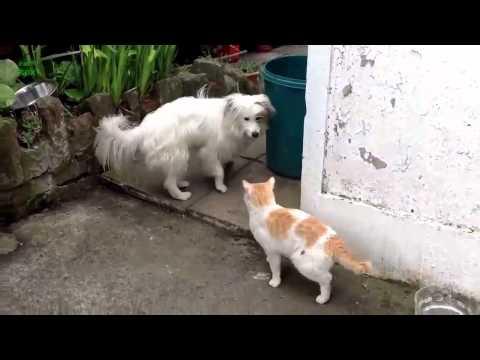 Вопрос: Почему моего кота боятся собаки?