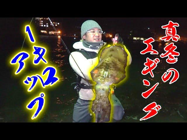 極寒の真冬の夜にキロオーバーのアオリイカが釣れる!?