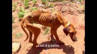 Recuperação do cachorro PALITO