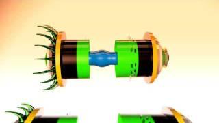 C4D Open Capsula Thumbnail