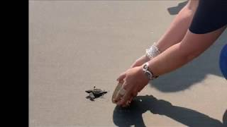 02-10-2019 -- Beach Horseback Riding & Baby Turtle Release by Poncho