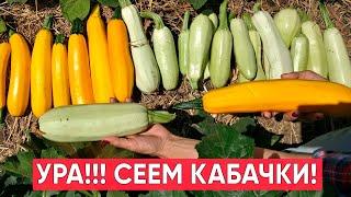 Как посеять кабачки весной, что бы быть с хорошим урожаем весь сезон!