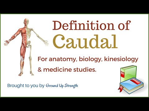 Caudal Definition (Anatomy, Biology, Kinesiology, Medicine)
