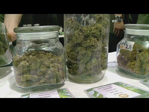 Sen. Scott Jensen On Legalizing Recreational Marijuana – Minnesota Alerts