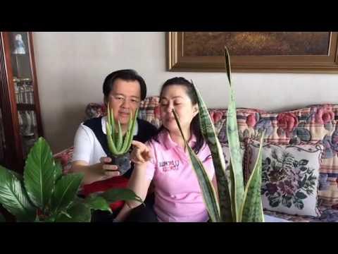 ARI ng lalaki or ITLOG ng lalaki, May tanong ka ba? Doc Adam will answer it from YouTube · Duration:  1 minutes 53 seconds