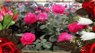 Миллион алых роз   Гугуш