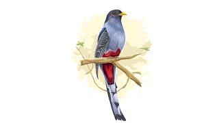 Time lapse adobe illustrator : Bird vector Illustration