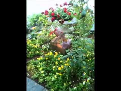 chovendo na roseira tom jobim edu lobo