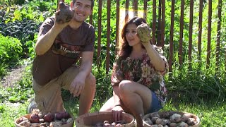 100% Organic Potato Harvest | MIgardener