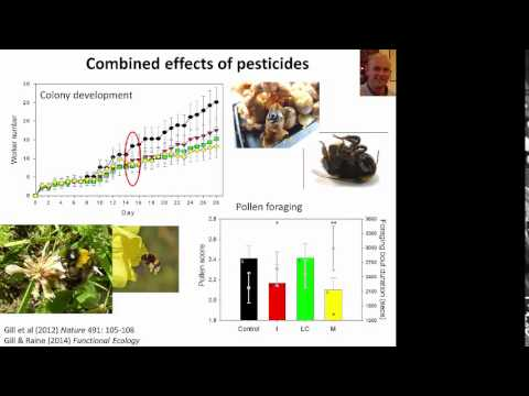 Nigel Raine: Pesticides, Parasites and Pollinators: The Impacts of Environmental Stressors on Bees