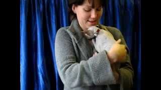 Голая кошка сфинкс на выставке кошек клубов PCA