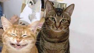 ПРИКОЛЫ С ЖИВОТНЫМИ Смешные Животные Собаки Смешные Коты Приколы с котами Забавные Животные 125