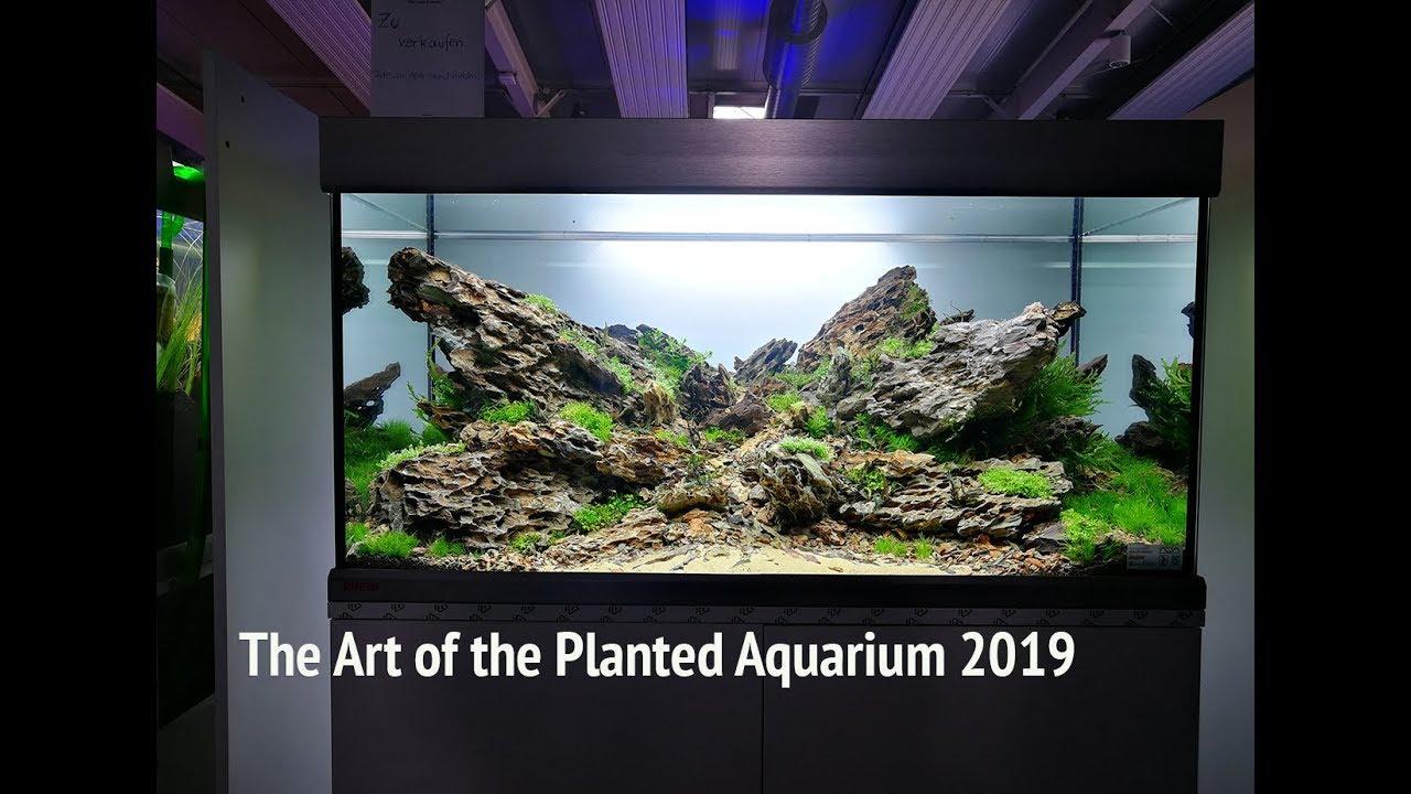 The Art Of The Planted Aquarium 2019 Aquascape Contest Youtube