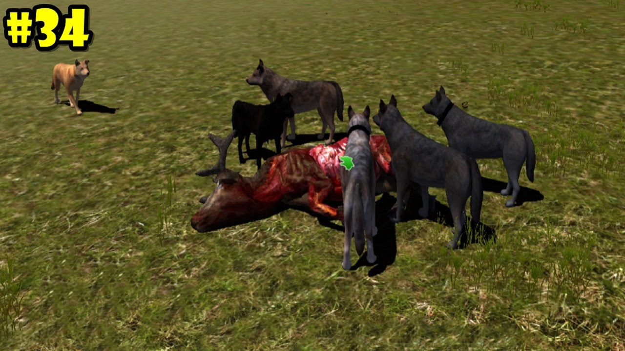 Wolf Quest Multiplayer -Update- Wolf Pack Hunting ... - photo#46