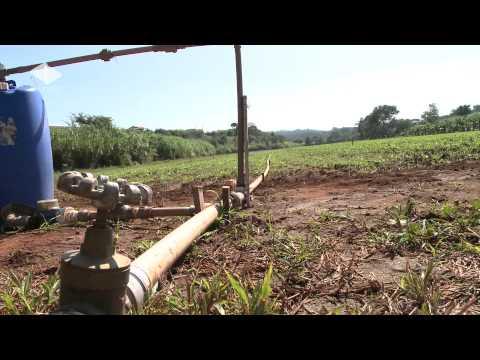 Unesp Informa - 27/06/2012 - Novas técnicas de irrigação otimizam a produção rural - Boletim