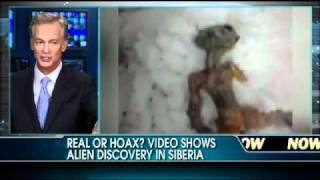 Believe It Or Not: Video Shows Alien Discovered in Siberia?!