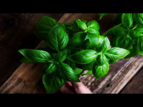 Important Reasons Why You Should Eat Basil Every Day!