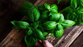 Important Reasons Why Y๐u Should Eat Basil Every Day!