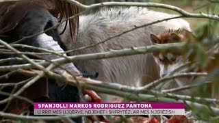 Ky është spanjolli që u rrit mes ujqërve - KURIOZITET ZICO TV