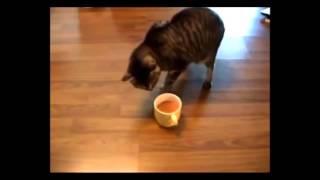 Мнение кота о кофе