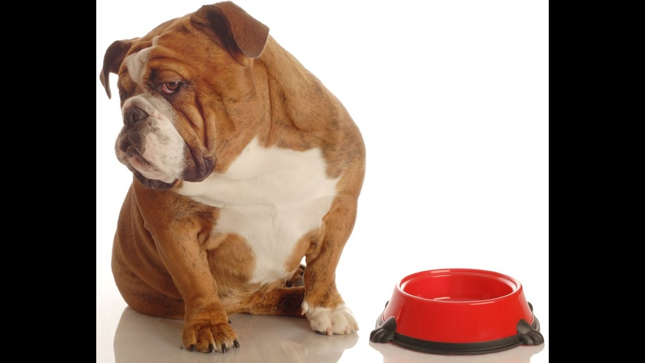 Best Dog Foods For Dogs With Cancer