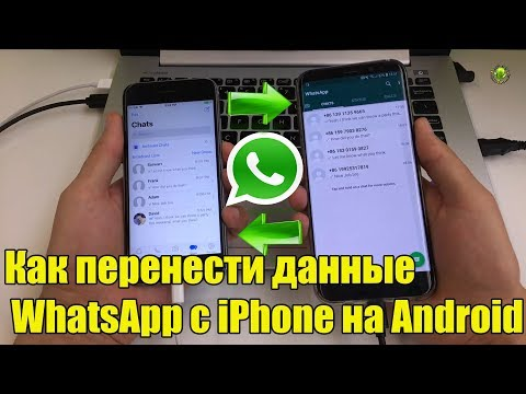 Как перенести данные  WhatsApp с iPhone на Android