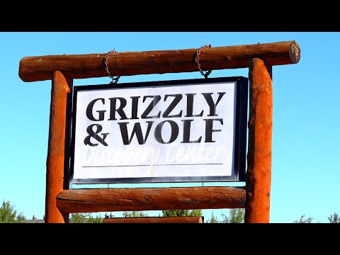 Grizzly and Wolf Discovery Center | West Yellowstone, Montana