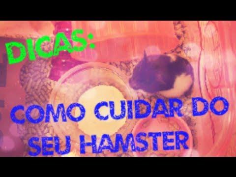 Dicas: Como cuidar do seu hamster