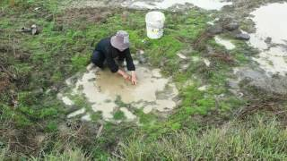 Вау! Красиві Дівчата Ловлять Рибу Руками - Кращі Рибальські Відео В Камбоджі