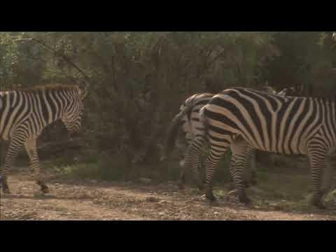 Zebra Breeders In Utah - America's Heartland