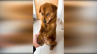 Приколы с животными 2019 #24. Видео про кошек до слёз 2019, смешные видео про котов и собак 2019