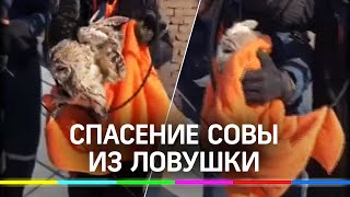 Сову спасли от стаи ворон в Москве - видео