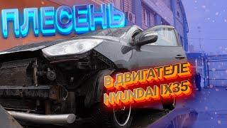 Жесть на СТО. Плесень на двигателе Hyundai IX 35