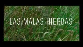 Pelicula mala hierba