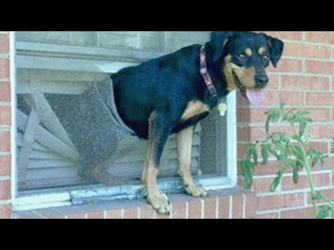 Hardest IF YOU LAUGH YOU LOSE CHALLENGE - Funniest DOG VIDEOS compilation