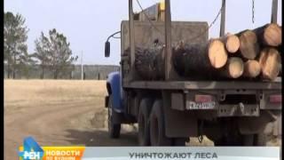 Погоня со стрельбой за «чёрными» лесорубами в Иркутском районе
