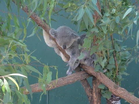 WILDLIFE ZOO | SYDNEY, AUSTRALIA
