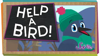 How To Help A Bird!