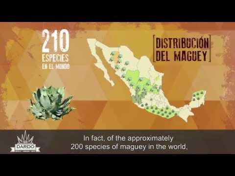 La producción del Mezcal y los destilados de agave