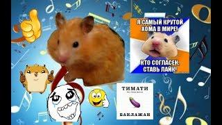 Реакция Буси на песню Тимати Лада Седан Баклажан