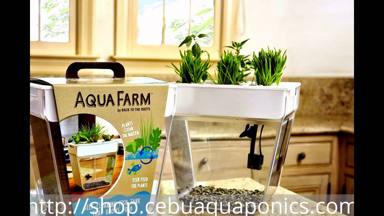 aquafarm-mini aquaponics kit - youtube