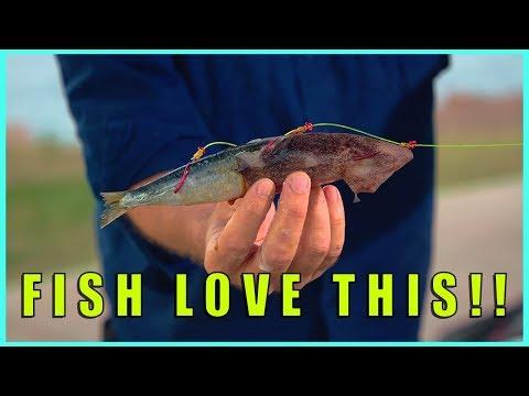BEST BAIT SECRETS | Catch More Fish | CoastFishTV Tackle Chat S02E03